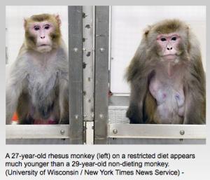 Monyet yang asupan kalorinya dibatasi, tampak lebih muda dibandingkan yang asupan kalorinya lebih banyak